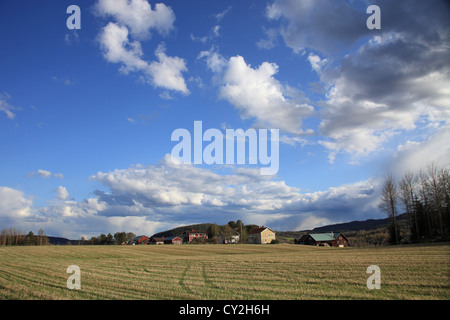 Swedish farm houses on a fine spring afternoon. Valley of river Angermanaelv, Vaesternorrland, Sweden - Stock Photo