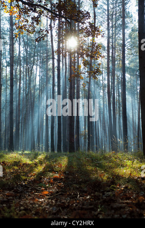 blue sunbeams in autumnal forest, mysterious landscape - Stock Photo