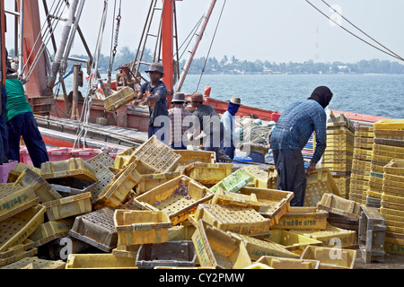 Thai fisherman unloading the days catch from a commercial fishing trawler. Hua Hin fishing port Thailand S. E. Asia - Stock Photo
