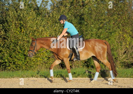Rider on back of a Bavarian horse: Patting the horse after the ride - Stock Photo
