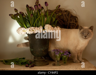 tulips and cat - Stock Photo