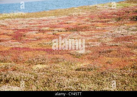 Saltings salt marsh environment Butley Creek river, Boyton, Suffolk, England - Stock Photo