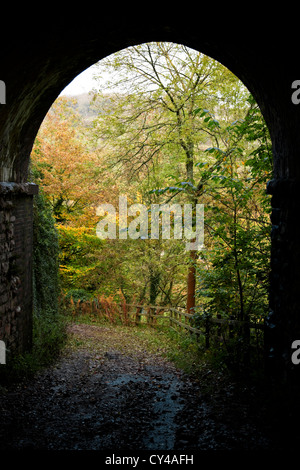 Outlook from inside a tunnel into autumnal woods - Stock Photo