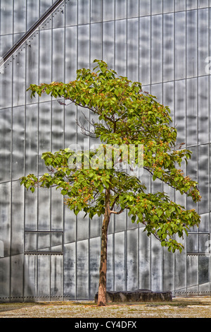tree in Jewish Museum in Berlin - Stock Photo