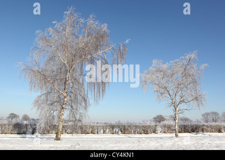 English landscape with two frost covered silver birch trees hedgerows and deep snow under a clear blue sky - Stock Photo
