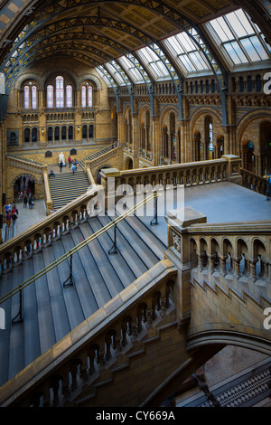 The Natural History Museum is on Exhibition Road, South Kensington, London, England - Stock Photo