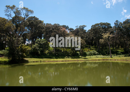 Lake in periyar tiger reserve Kerala - Stock Photo
