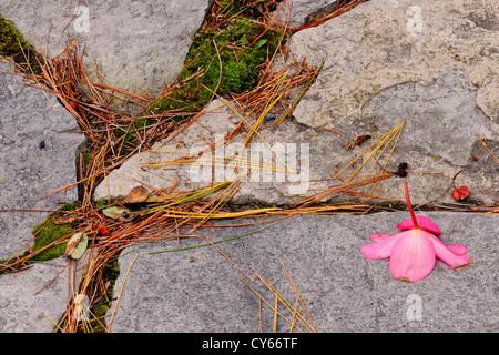 Exceptional Patio Stones And Begonia Flowers, Greater Sudbury, Ontario, Canada   Stock  Photo