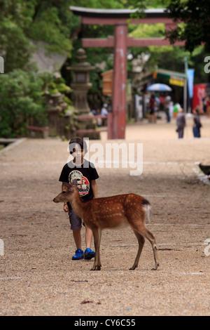 A young boy warily watches a wild deer at the entrance to Kasuga Taisha Shrine, Nara, Japan. - Stock Photo