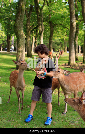 A young boy feeds wild deer in the grounds of a Nara, Japan park at the entrance to Daimonji Temple. - Stock Photo