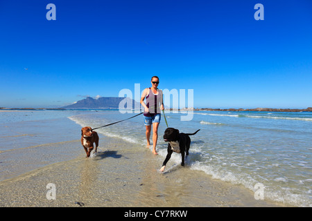 Cape Town, South Africa. A young woman with her dogs on a beach in Cape Town with Table Mountain as a backdrop - Stock Photo