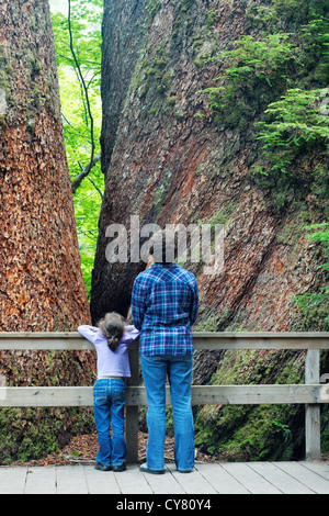 Mother and daughter on boardwalk looking at massive douglas fir trees, Grove of the Patriarchs Trail, Mount Rainier, - Stock Photo