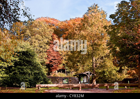 Colourful trees standing tall in the Autumn sunshine at the north entrance of Camperdown Country park in Dundee,UK - Stock Photo
