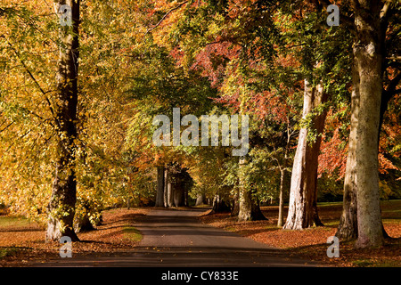 Avenue of trees with Autumn colours at the Camperdown country park in Dundee,UK - Stock Photo