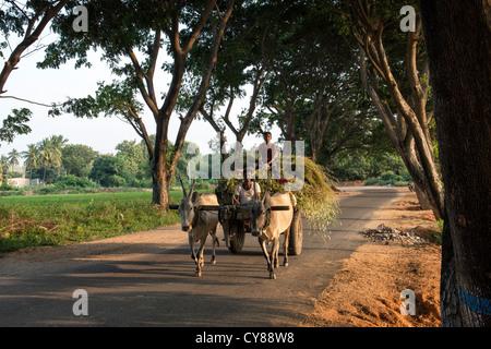 Indian bullock cart and driver traveling along a tree lined road, Andhra Pradesh, India