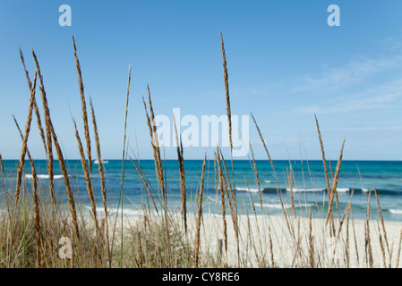 Tranquil beach scene with dune grass in foreground - Stock Photo