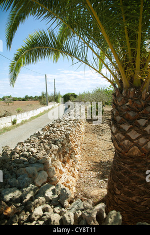 Dirt road lined by stone wall, palm tree in foreground - Stock Photo