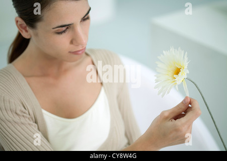 Young woman plucking petals from gerbera daisy - Stock Photo