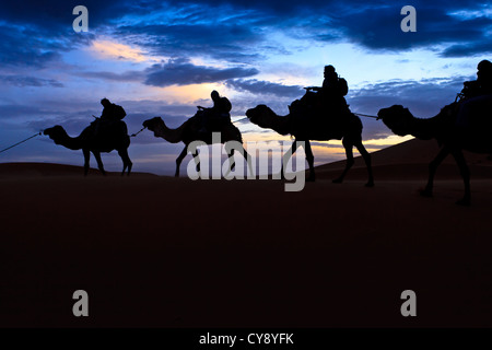 Four Camel train silhouetted against colorful sunset sky in the Sahara Desert Morocco - Stock Photo