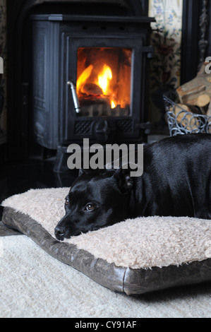 black staffie dog lying in front of wood burning fire - Stock Photo