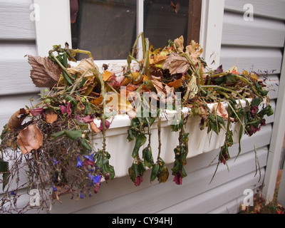 Dead plants in a window planter - Stock Photo