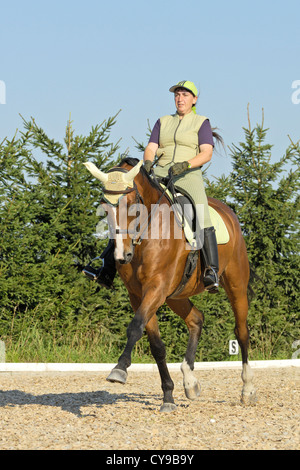 Woman riding dressage on back of a Bavarian breed horse (medium trot) - Stock Photo