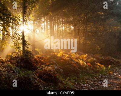 Sherwood Forest Sunrise - Stock Photo