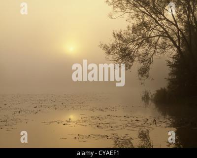 sunrise over a misty pond - Stock Photo