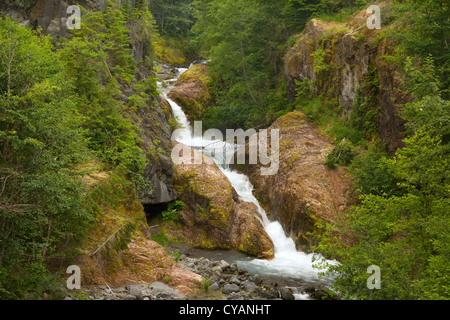 WA04438-00...WASHINGTON - The Muddy River descending through Lava Canyon in Mount St. Helens National Volcanic Monument. Stock Photo