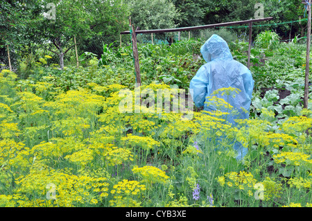 seasonal work in the vegetable garden in rainy weather - Stock Photo