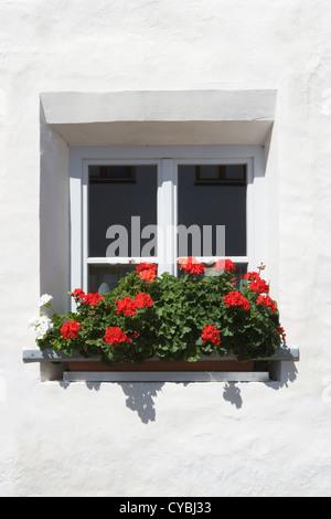 Alpe di Siusi:  window box & geraniums on chalet - Stock Photo