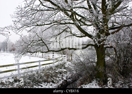 Tree covered with hoar frost next to a fenced paddock - Stock Photo