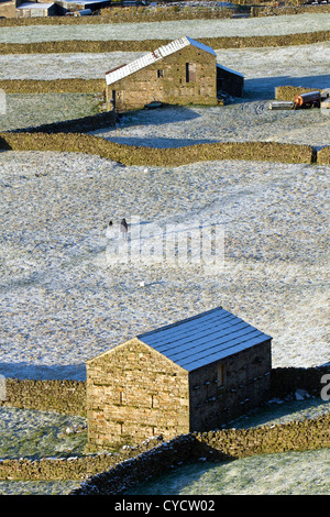Gunnerside Flats; Farming landscapes, a walker with dog and Stone Barns at Gunnerside Flats, Swaledale,  North Yorkshire - Stock Photo