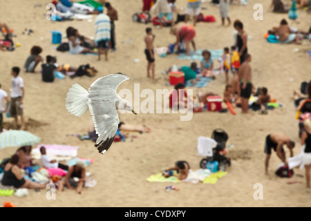 The Netherlands, Scheveningen, near The Hague or in Dutch: Den Haag. Seagull flying over people sunbathing on the - Stock Photo