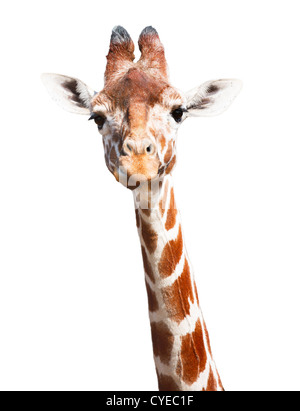 Giraffe head and neck isolated against a white background with clipping path - Stock Photo