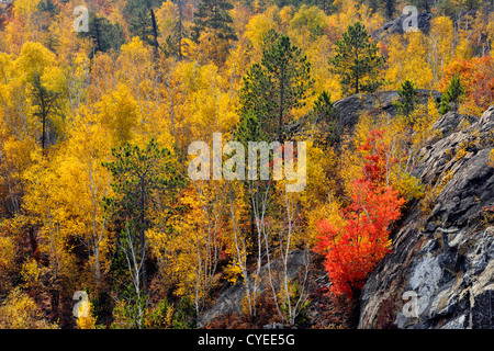 Aspens and birches, with pines and maple on rocky hillside, Greater Sudbury, Ontario, Canada - Stock Photo