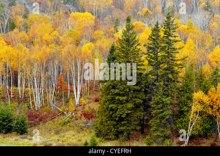 Spruces, birch and aspen on hillside in Junction Creek Valley in autumn, Greater Sudbury, Ontario, Canada - Stock Photo