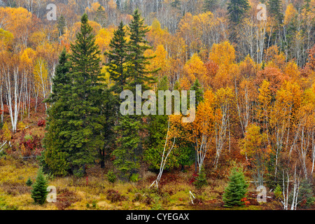 Birches, spruces and aspens on a hillside in late autumn, Greater Sudbury, Ontario, Canada - Stock Photo