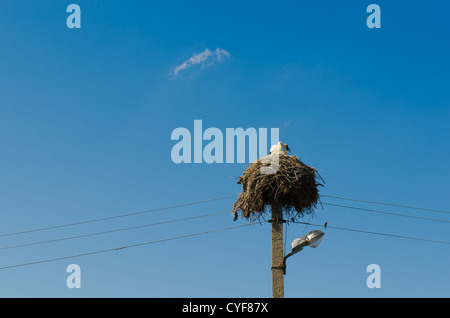 Two young storks sitting in their nest atop power line pole - Stock Photo