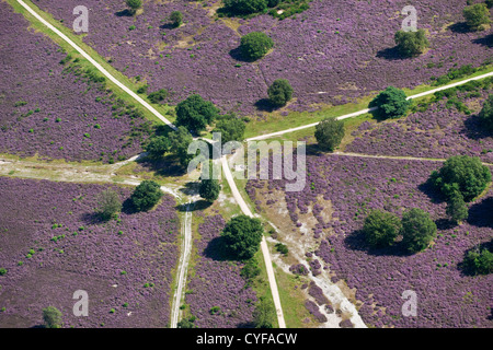 The Netherlands, Loosdrecht. Flowering heath field and walking paths. Aerial. - Stock Photo