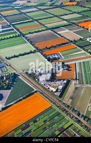 The Netherlands, Grubbenvorst. Horticulture. The orange fields are flowering African marigold ( Tagetes ). Aerial. - Stock Photo