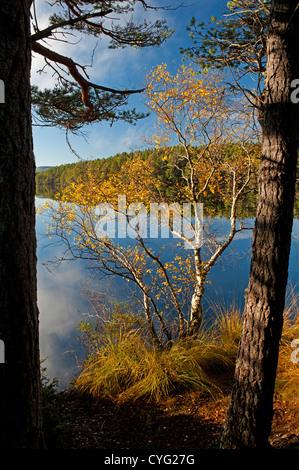 Loch Garten in Autumn, Nethybridge, famous for Osprey nesting activity, Inverness-shire, Scotland.  SCO 8751 - Stock Photo