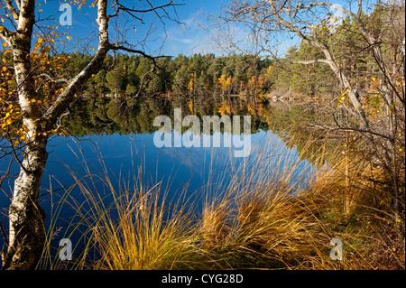 Loch Garten in Autumn, Nethybridge, famous for Osprey nesting activity, Inverness-shire, Scotland.  SCO 8752 - Stock Photo
