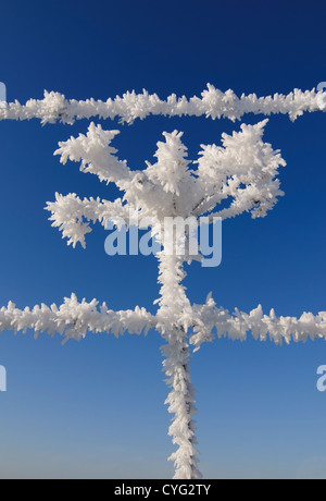 Cow Parsley (Anthriscus sylvestris) covered in frost with barbed wire on a clear winter day - Stock Photo