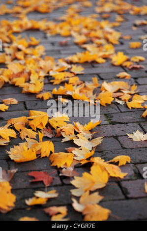 yellow autumn maple leave on brick ground - Stock Photo