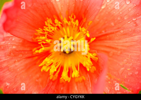 Macro photo of a flower. - Stock Photo