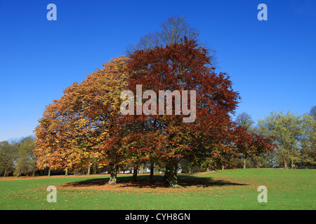 Trees showing autumn colours in Roundhay Park Leeds, England, UK - Stock Photo