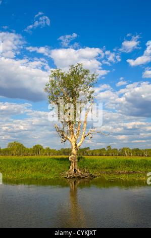 Yellow Water Billabong, Kakadu National Park, Northern Territory, NT, Australia - Stock Photo