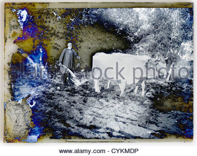 fading emulsion on glass plate photo with farmer and oxen - Stock Photo