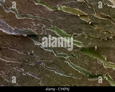 SEM of chemically deposited Zinc on metallic substrate (visible boundaries and cracks) - Stock Photo
